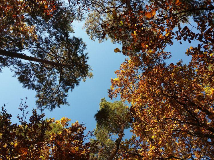Bäume im Himmel gedreht 750.jpg
